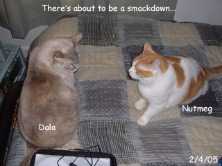 Cat Smackdown